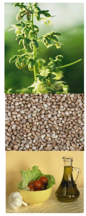 Hemp Seeds-Hemp-oil